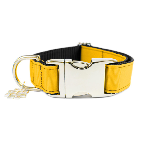 Goldenyellow collar