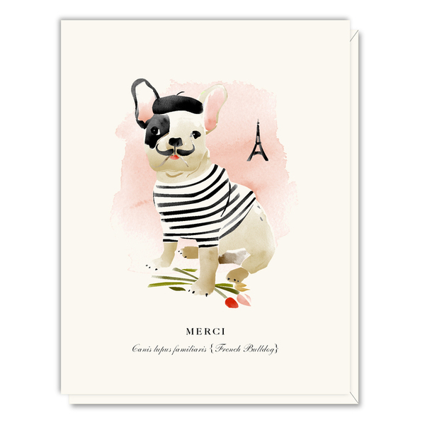 A046 french bulldog