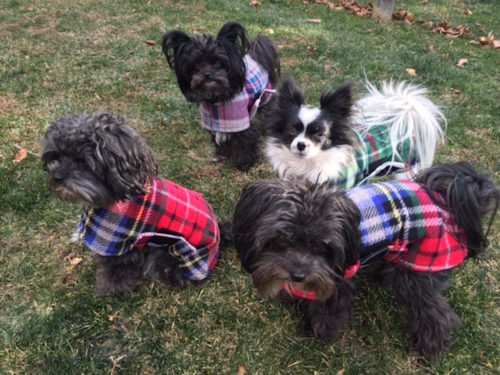 Pups in deluxe plaids 500x375