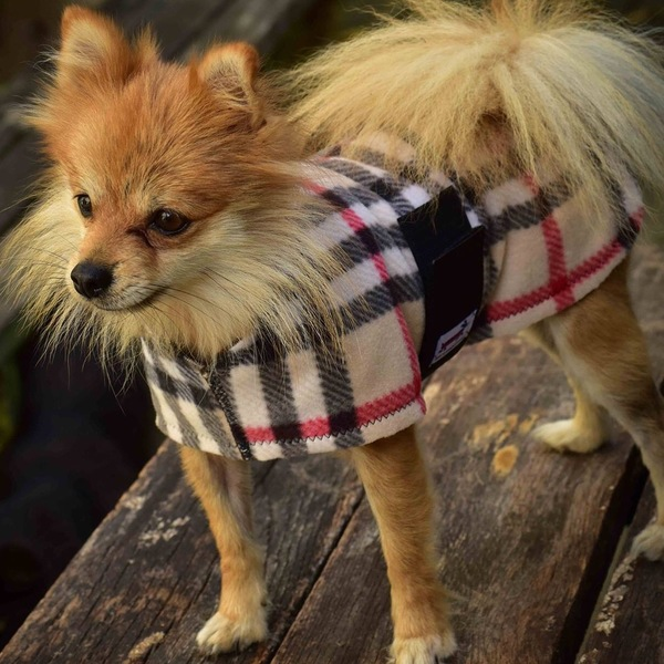 Papillion in fleece