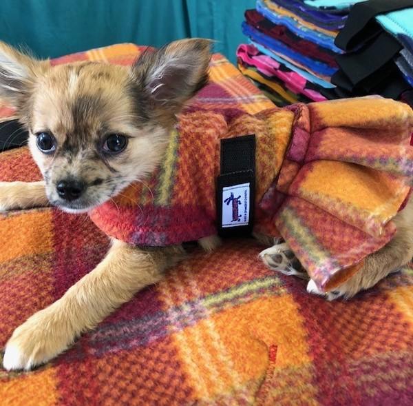 Tinydoginskirtcoat
