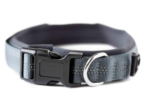 25 grey padded dog collar %281%29